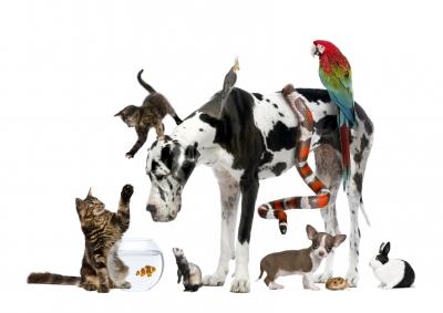 Cele mai interesante 10 lucruri despre animalele din casa ta