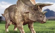 Dinozaurul Triceratops - noi descoperiri