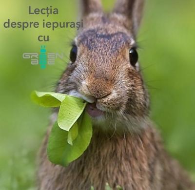 Lecția despre iepuri