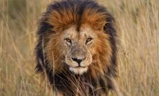 9 lucruri impresionante despre lei