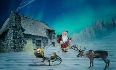 Renul, animalul vedeta al sezonului de iarna