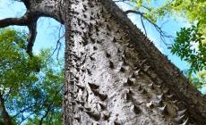 Sandbox – copacul acoperit de tepi care face fructe ce explodeaza