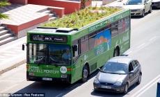 Autobuze cu gradini pe acoperis