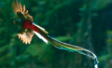 Stralucitoarea pasare Quetzal