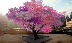 Pomul in care cresc 40 de tipuri de fructe